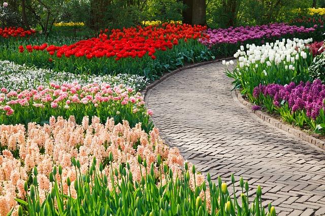rozdělené květiny