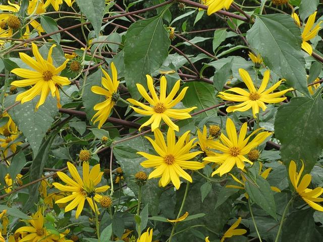 nevšední žluté květy